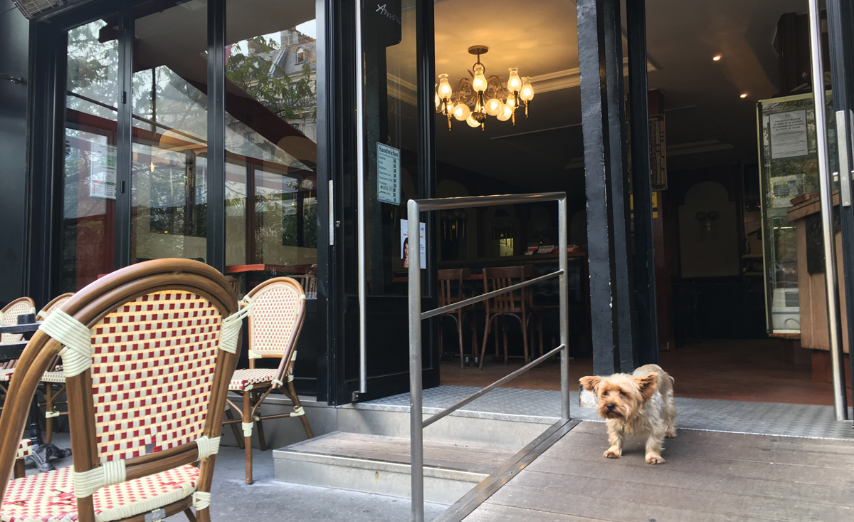 これは偶然なんだけども、過去初めてパリにきたときと今回の旅で最初に出会った犬の犬種?が同じで和んだ瞬間。かわいい奴だ。パリに住んで好きになったものは珈琲とバゲット。
