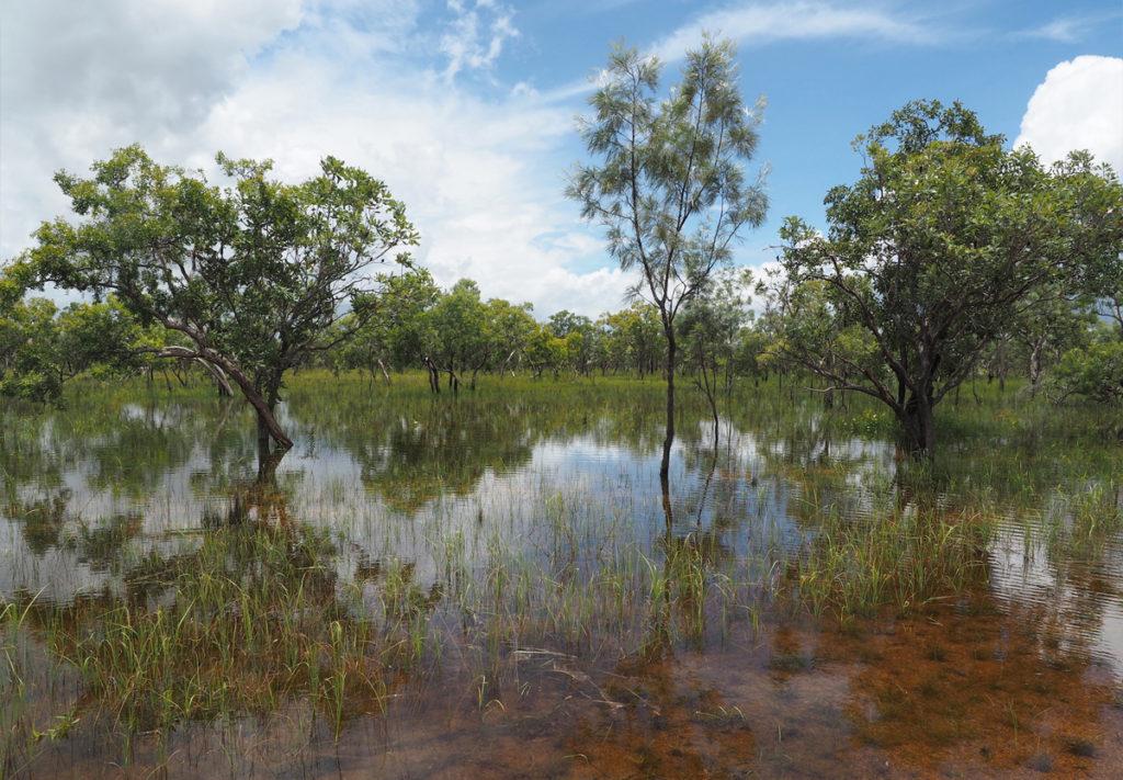 ハイウェイ脇にこんな湿地が広がる