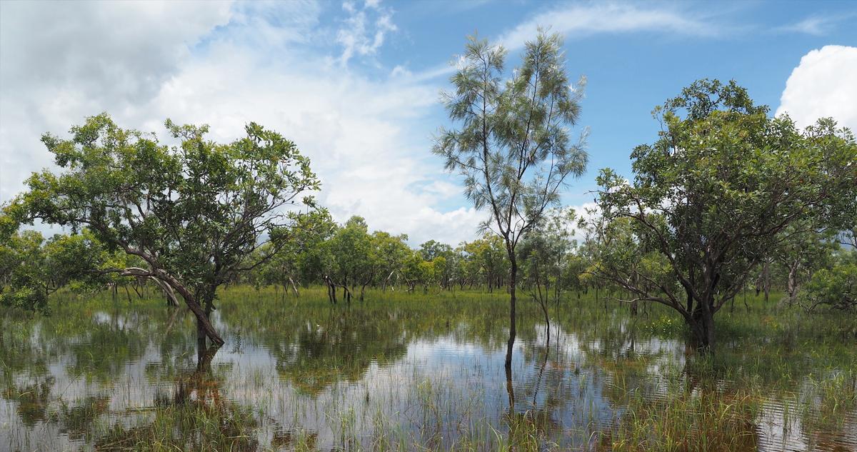 雨季のオーストラリアをHuercoと旅する。 後編:ノーザンテリトリー準州