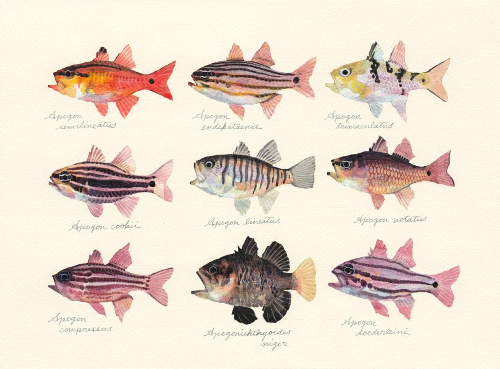 テンジクダイ科の魚たち