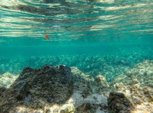 ルアーになって泳ぐ。自然の一部を演じる楽しみ