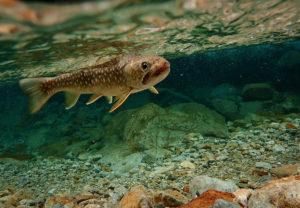 水中にいる魚は釣られた魚とはまるで違う表情をしていた