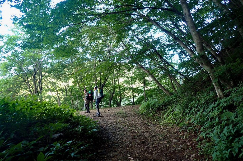 これはまだ序盤できちんと林道がありますが、終盤は林道か獣道か分からないようなガレた道になります。
