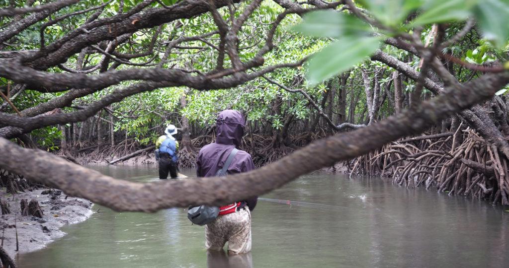 ターゲット魚種が好む棲息環境 : 下流~河口(汽水域)
