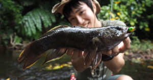 ルアーでの釣りに対してアグレッシブに反応してくれる魚種も多い
