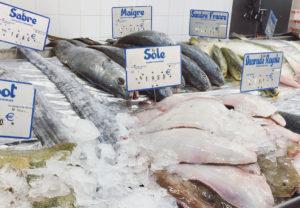 スーパーで出会えるお魚さん①-1