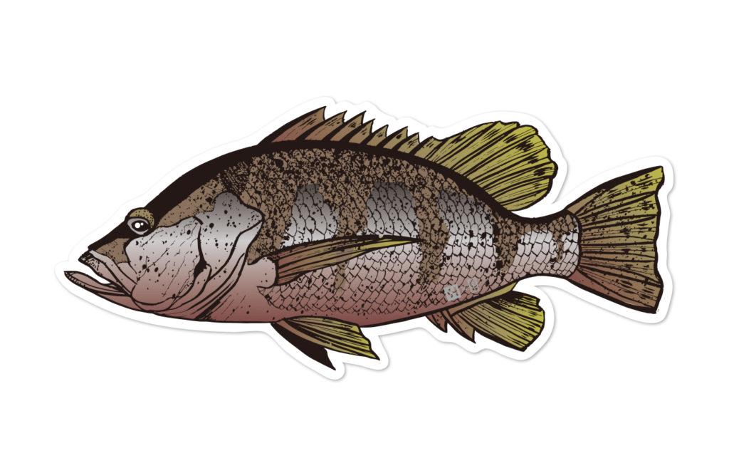 Fish Sticker パプアンバス