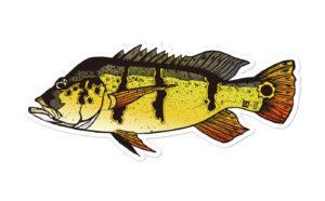Fish Sticker ピーコックアスー