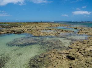 延べ竿で楽しむ海の「超小物」狙い