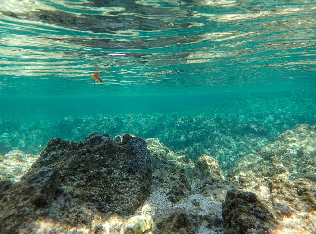 ルアーになって泳ぐ。自然の一部を演じる楽しみ Huercoアンバサダー長嶋祐成